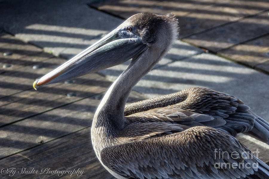 My Feathered Friends by Ty Shults