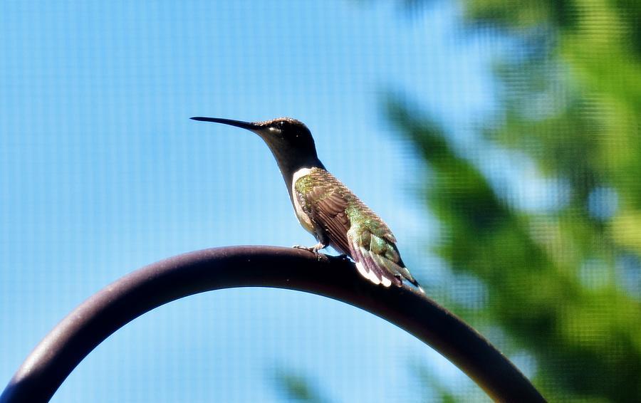 My First Hummingbird by Eileen Brymer