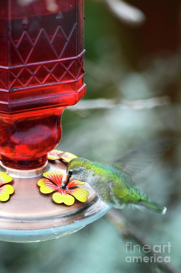 My Hummingbird by Carol Eliassen