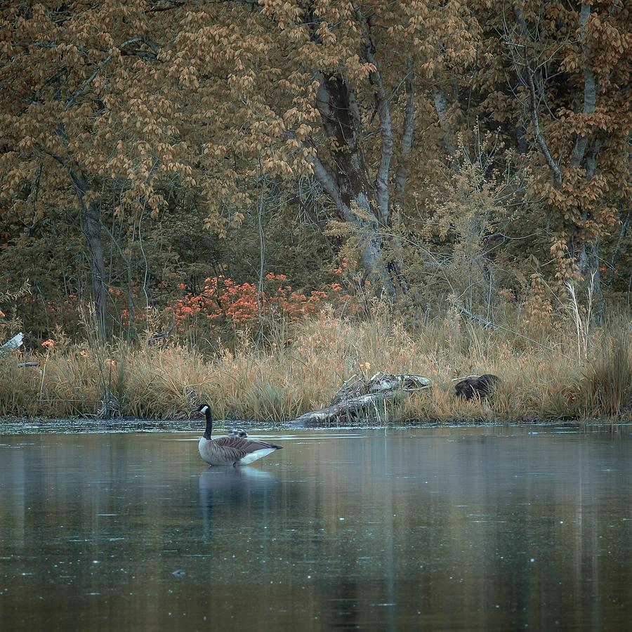 My Lake,Inns Brook by Rick Cooper