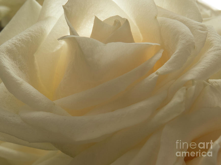 My Sister's Rose 1 by Christy Garavetto