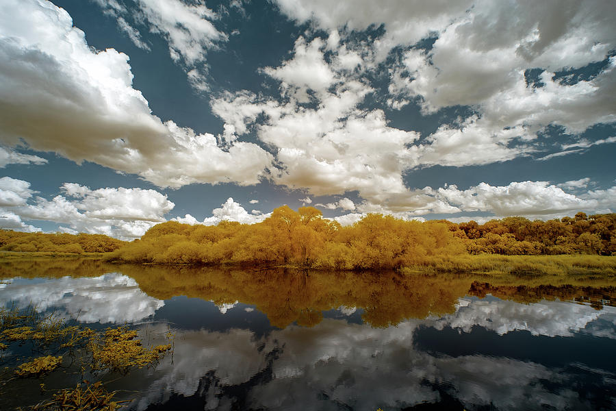 Jon Glaser Photograph - Myakka State Park In Florida  by Jon Glaser