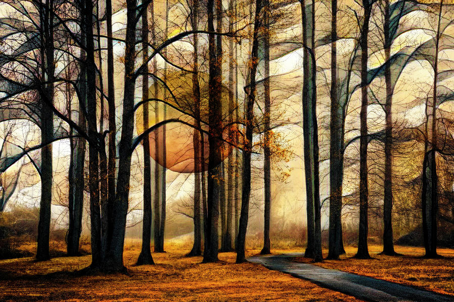 Mysterious Forest by Debra and Dave Vanderlaan
