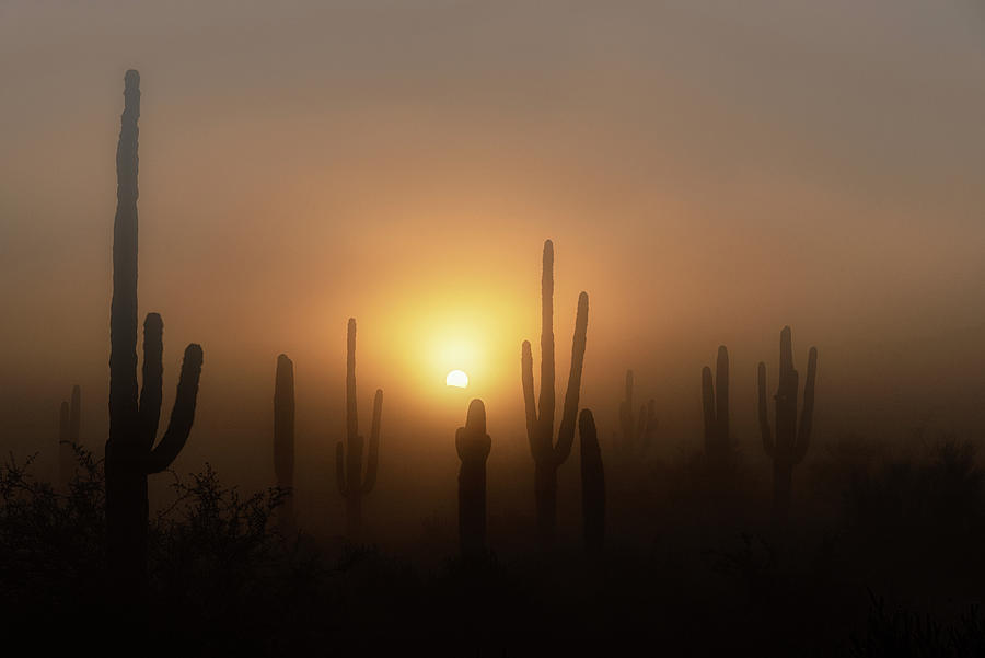 Sunrise Photograph - Mystic Desert Sunrise  by Saija Lehtonen