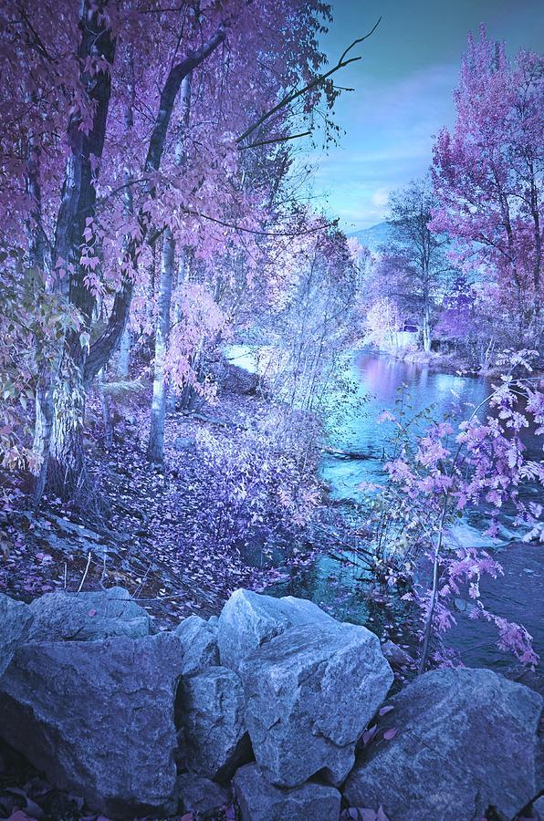 Mystic Morning by Tara Turner