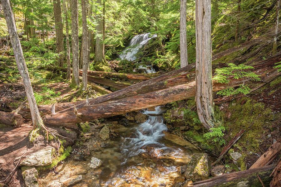 Mystic Trail by Kristopher Schoenleber