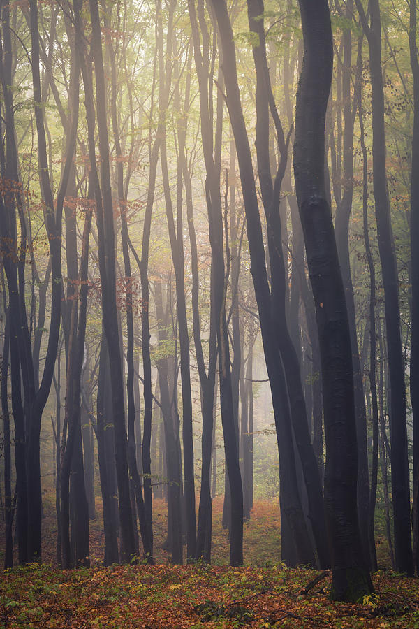 Woodland Photograph - Mystic Woodland by Toby Luxberg