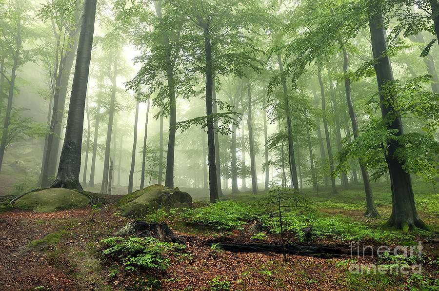 Forest Photograph - Mystical Foggy Forest On The Slope by Kritskiy-ua