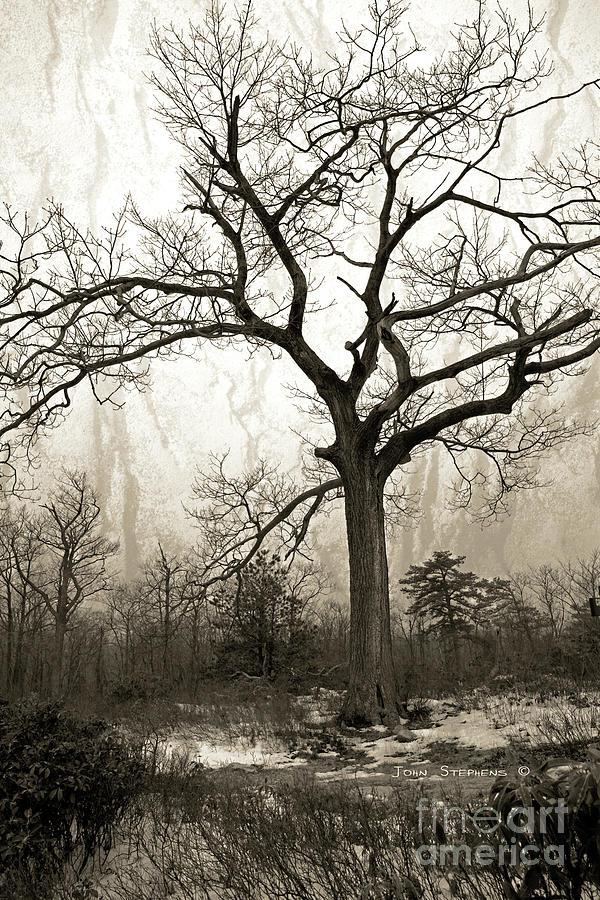 Mystical Forest Photograph
