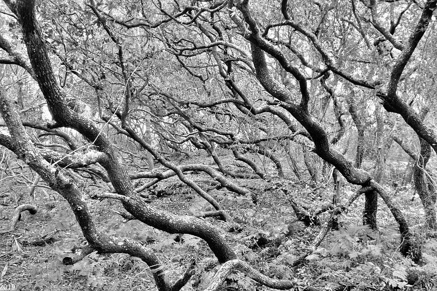 Mystical Forest Black And White by Lisa Wooten