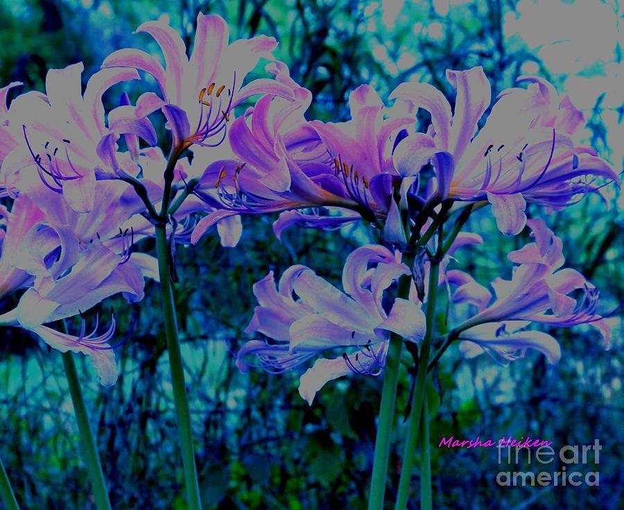 Photo Digital Art - Mystical Lilies by Marsha Heiken