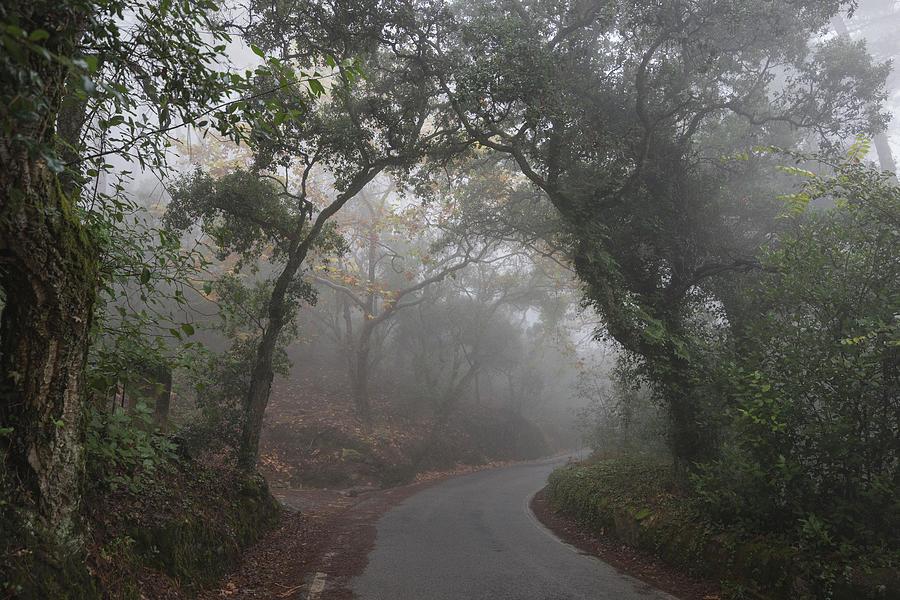 Fog Photograph - Mystical Road Towards The Palacio De Regaleira With Fog by Cavan Images