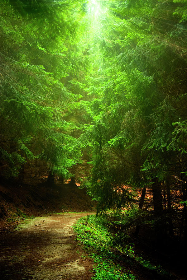 Mysty Forest Path Photograph by Cesair