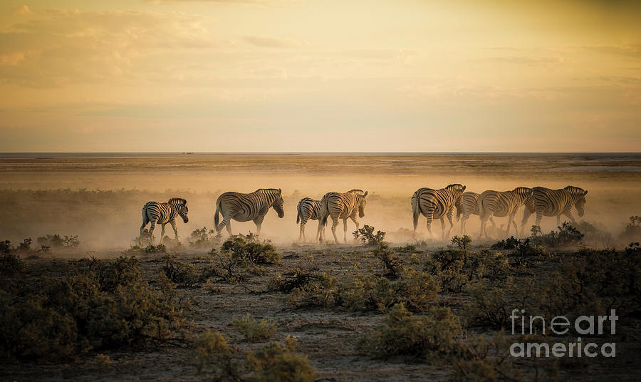 Namibia, Etosha National Park, Herd Photograph by Westend61