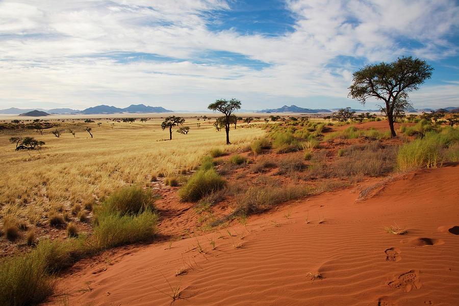 Namibrand Duenen Photograph by Lucynakoch