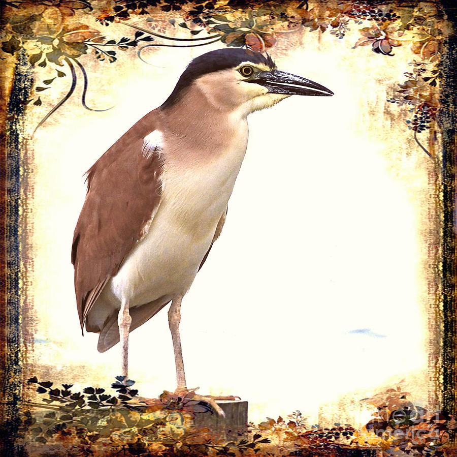 Nankeen Night Heron #4 by Trudee Hunter