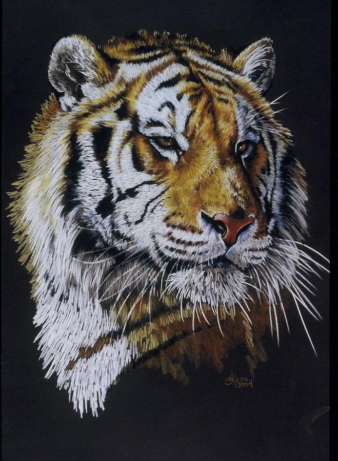 Panthera Drawing - Nanook the Tiger by Barbara Keith