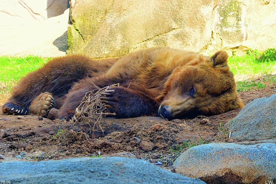Nap Time Brown Bear by Lisa Wooten