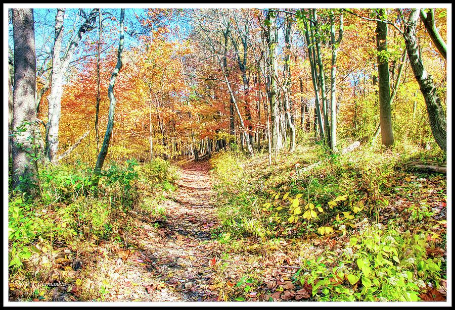 Narrow Path, Autumn Woods, Southeastern Pennsylvania by A Gurmankin