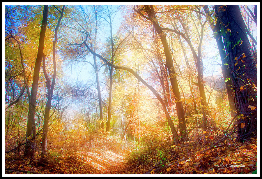 Narrow Path in a Forest, Autumn by A Gurmankin