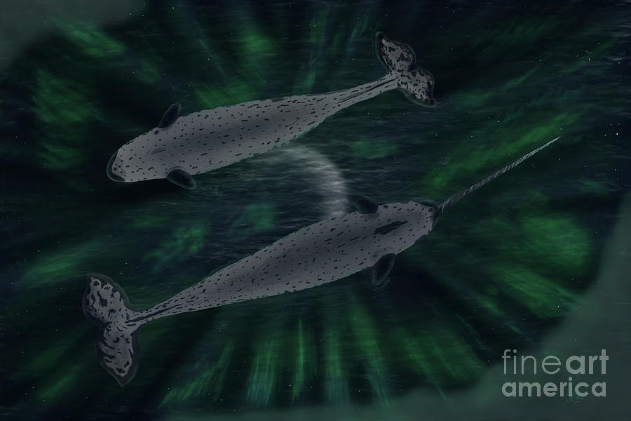 Narwhal Auroras by the Ford Family