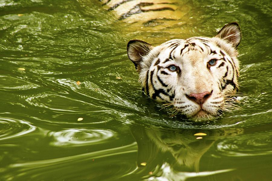 National Animal Photograph by This Is Captured By Sandeep Skphotographys@gmail.com