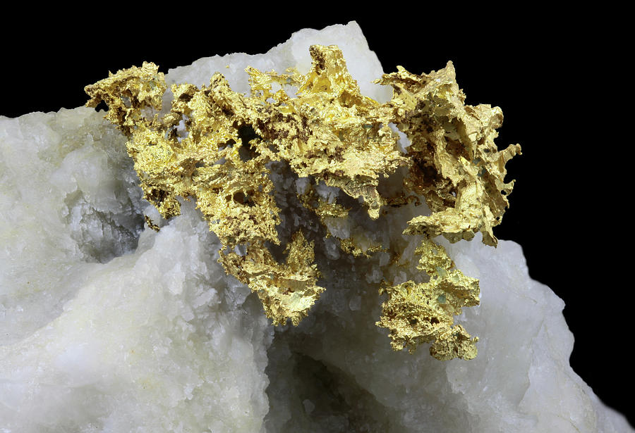 Native Gold On Quartz Photograph by Matteo Chinellato - Chinellatophoto
