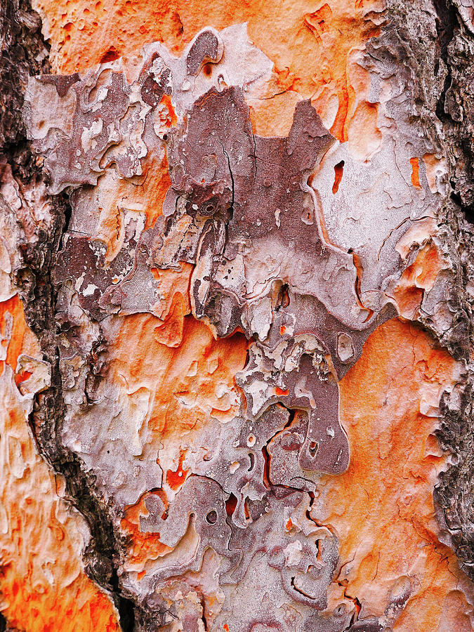 Aussie Pine Tree Bark by Lexa Harpell