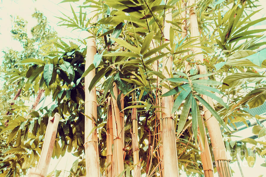 Natural bamboo trees retro by Marina Usmanskaya