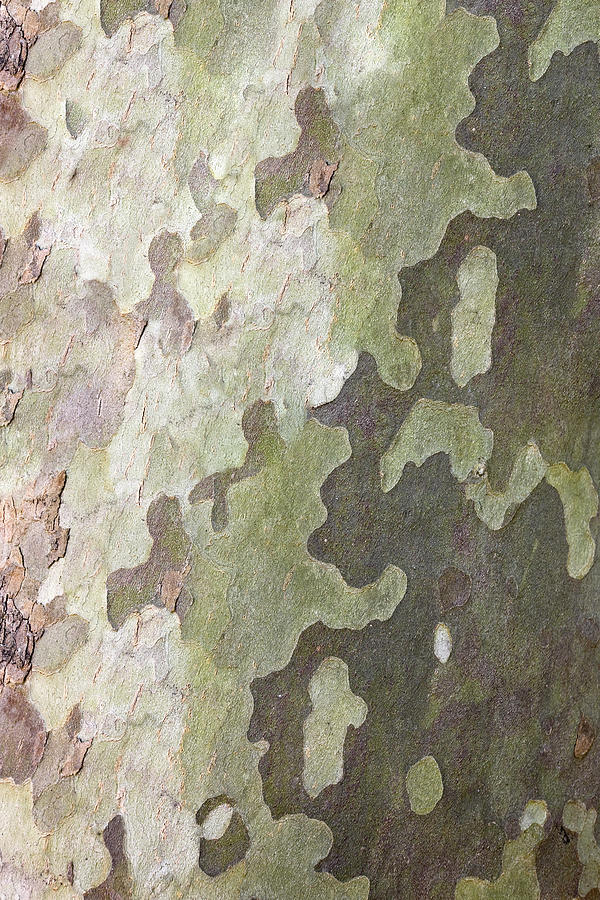 Natural Camouflage Texture Photograph by Tma1