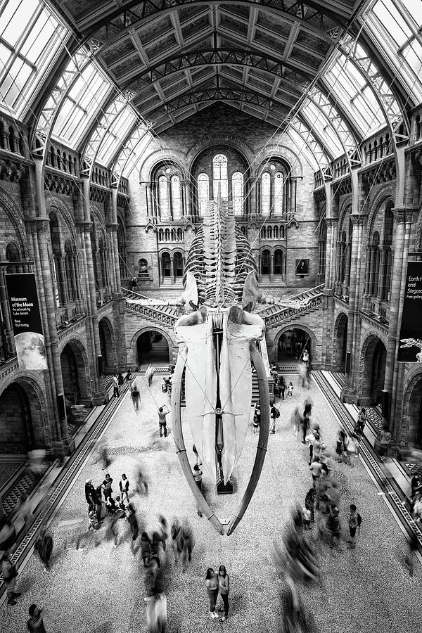 Natural History Museum in London by Michalakis Ppalis