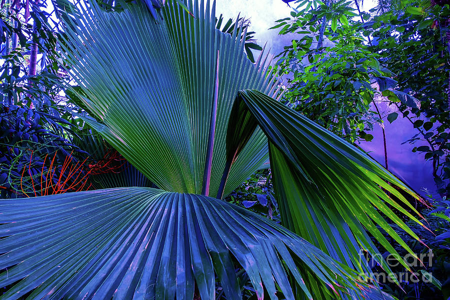Natural palm background toned  by Marina Usmanskaya