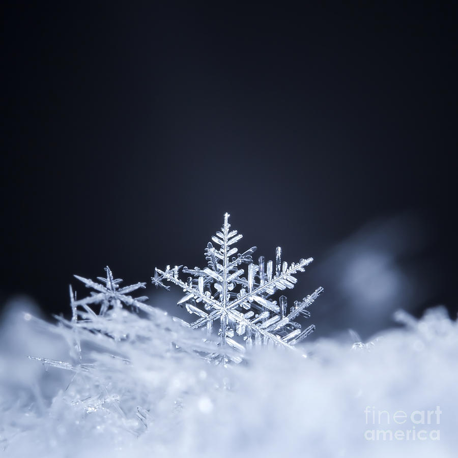Snowfall Photograph - Natural Snowflakes On Snow Photo Real by Ch123