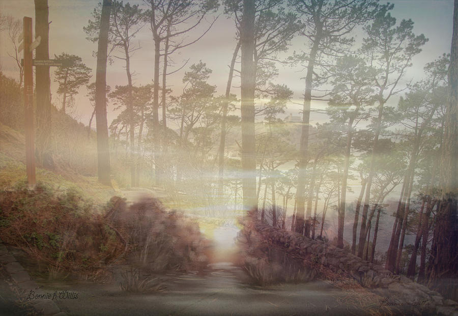 Nature in Early Morning by Bonnie Willis