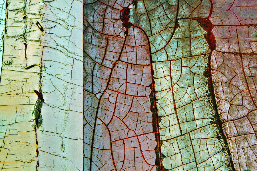 Grunge Photograph - Nature Or Nurture by Marilyn Cornwell