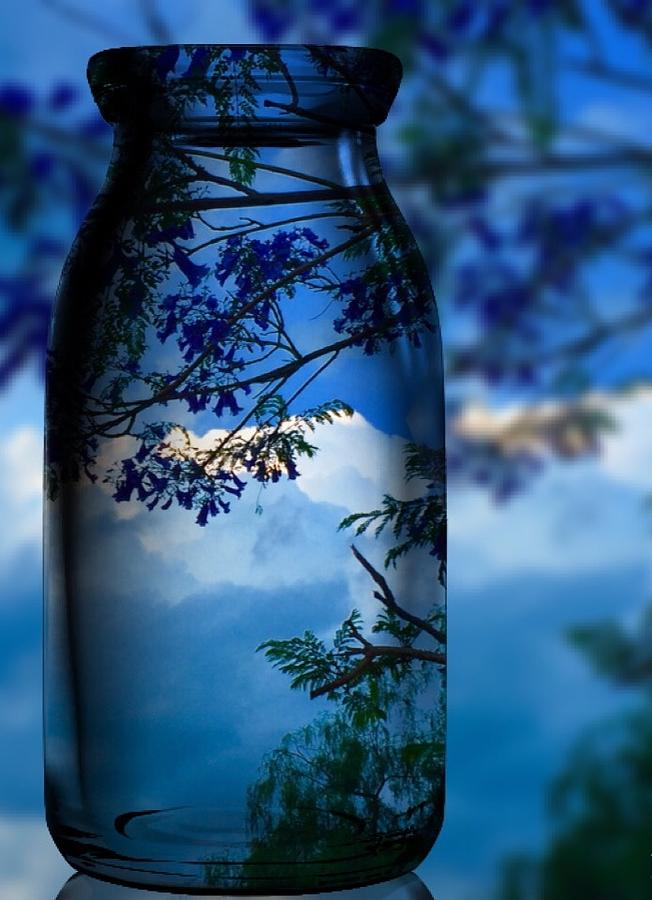 Nature Through Bottle  by Colette V Hera Guggenheim