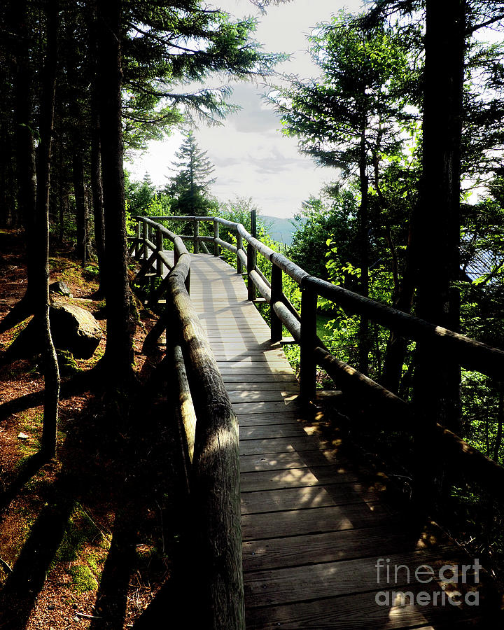 Nature Walk Photography Photograph