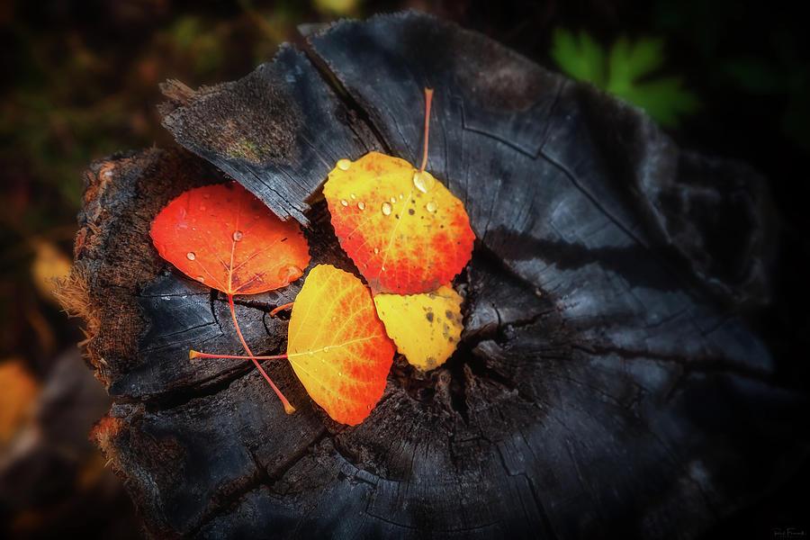 Nature's Color Wheel - 2904 by Rick Furmanek