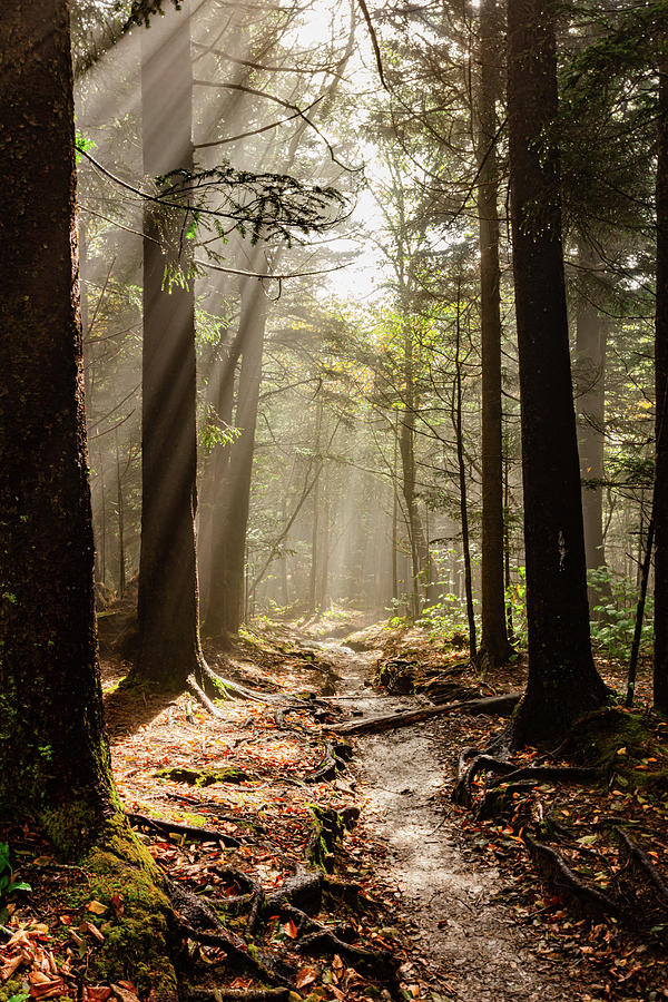 Natures Light Andrews Bald,SMNP by Kelly Kennon