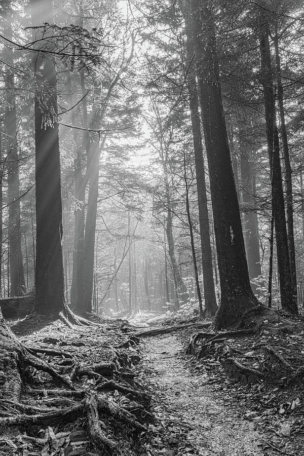 Natures Light B W by Kelly Kennon