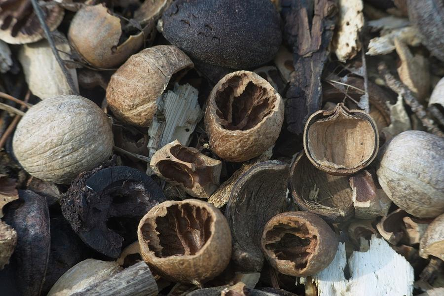 Natures Nuts by Douglas Barnett