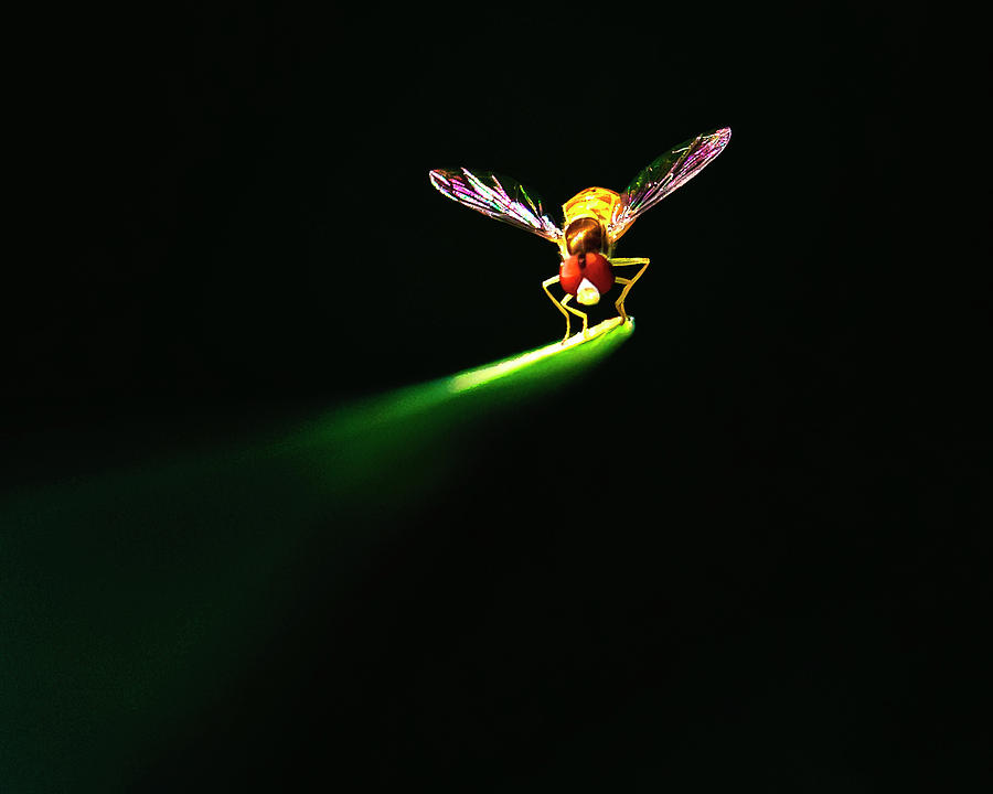 Insect Photograph - Natures Spotlight On An Insect by Vicki Jauron, Babylon And Beyond Photography