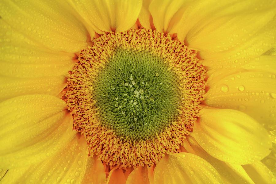 Macro Photography Photograph - Natures Sunshine by Az Jackson