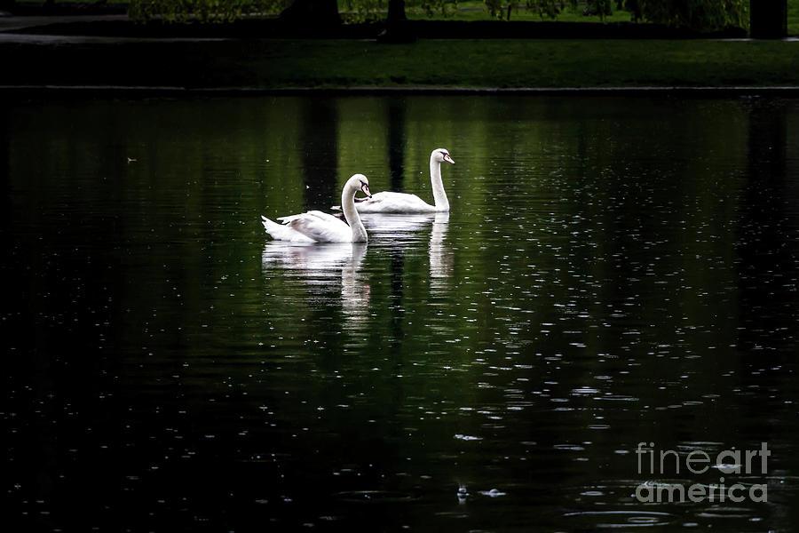Natures True Love Birds Photograph