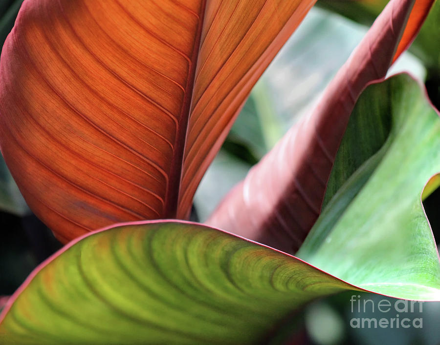 Leaves Photograph - Natures Warmth by Karen Adams