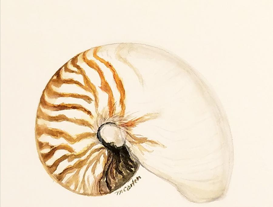 Nautilus by M Carlen