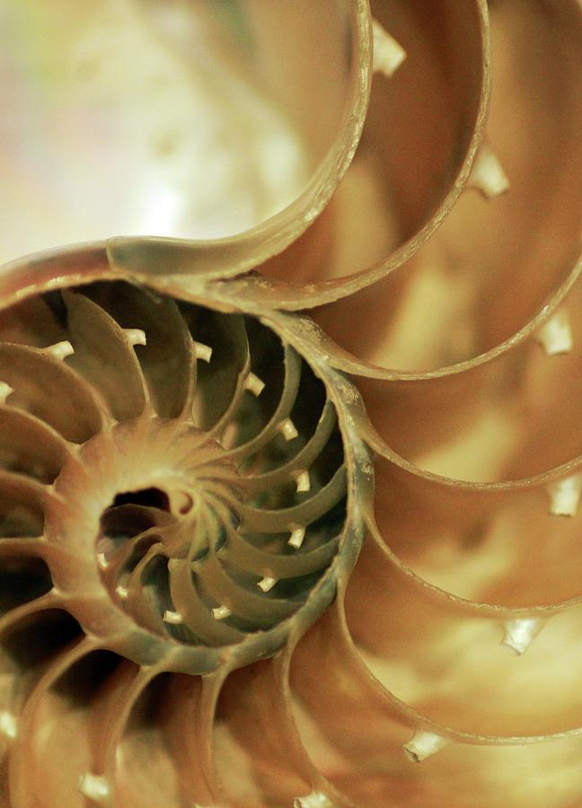 Nautilus Shell Digital Art by Victor Habbick Visions