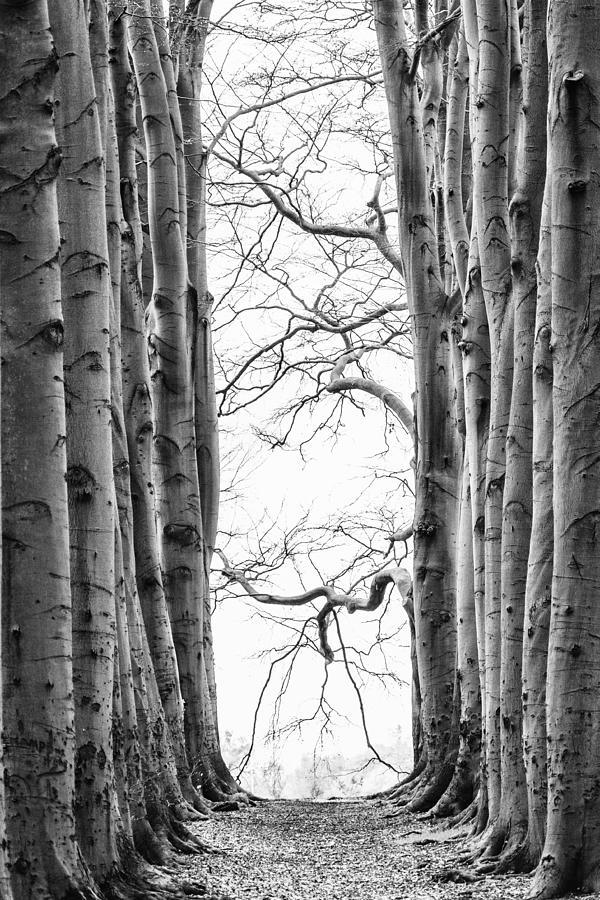 Landscape Photograph - near Kozakkenveer by Jan Pranger