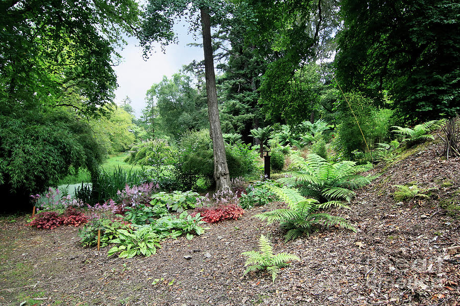 Near The Pond At Enys Photograph