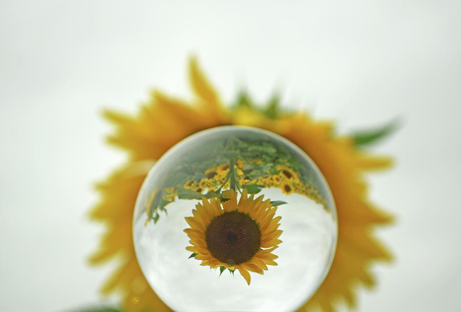 Negative Sunspace Photograph by Staci Grimes
